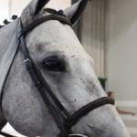 Hunter Horse Head