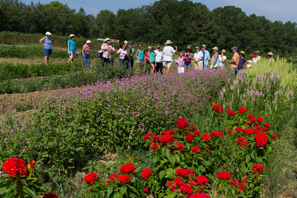 The group looks at celosia, gomphrena, and sunflower beds.