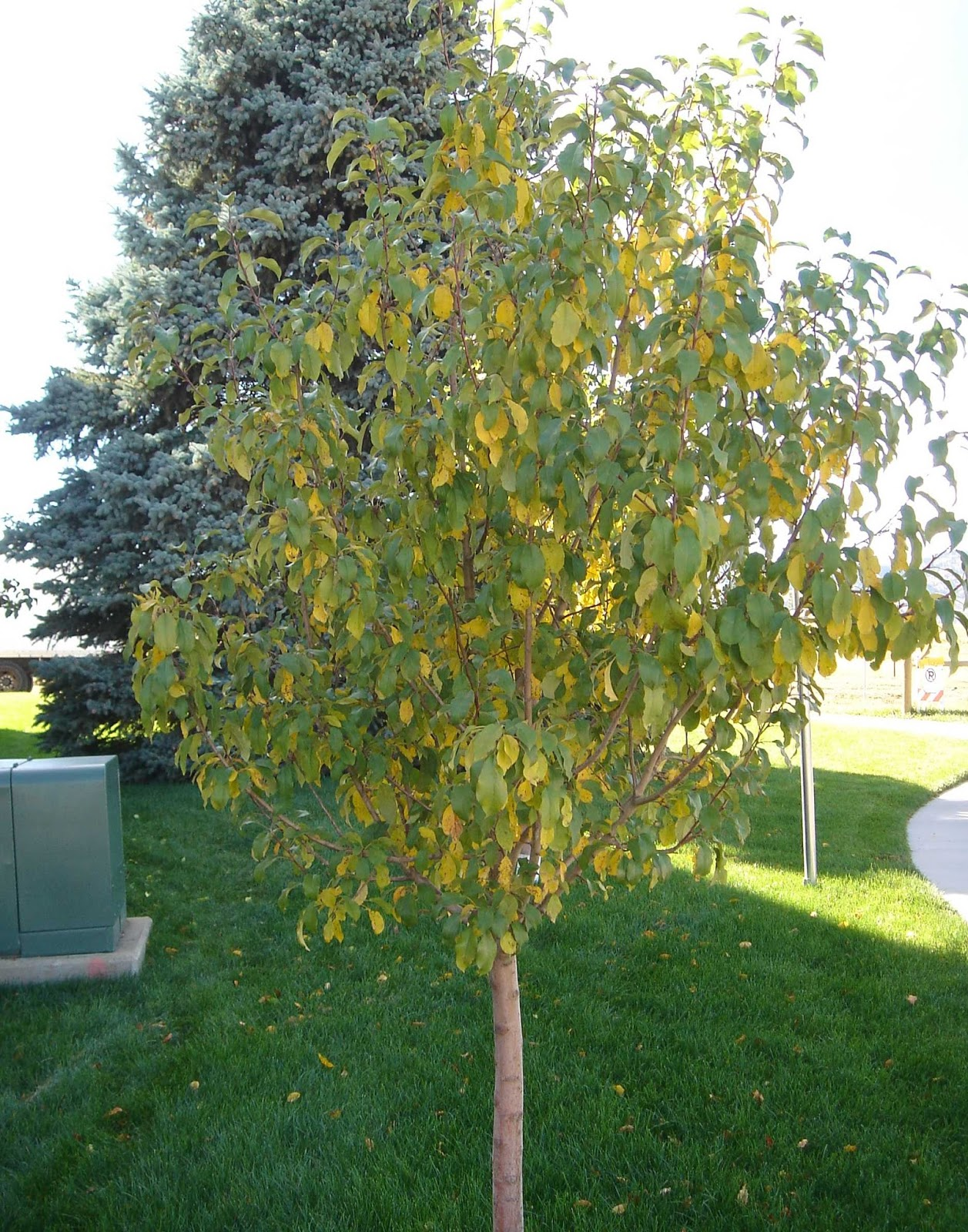 Have Your Trees Started Dropping Their Leaves Already? | North ...