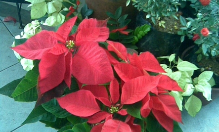Houseplants And Their Care For The Winter North Carolina