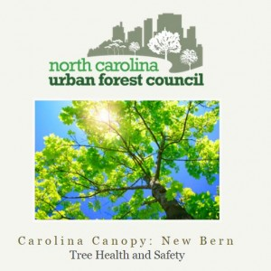 Carolina-Canopy-New-Bern-2015