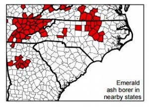 Cover photo for Entire State Now Under Quarantine for Emerald Ash Borer