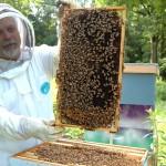 beekeeper-682944_1280