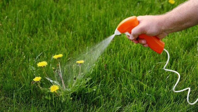 Not known Facts About Weed Killer Tips