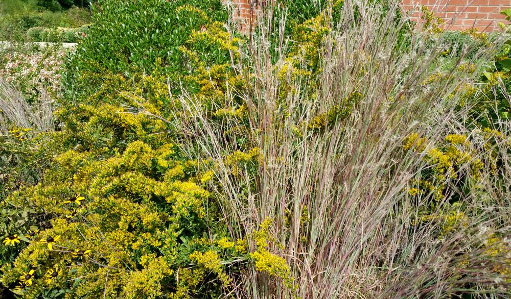 I love the combo of goldenrod with little bluestem.