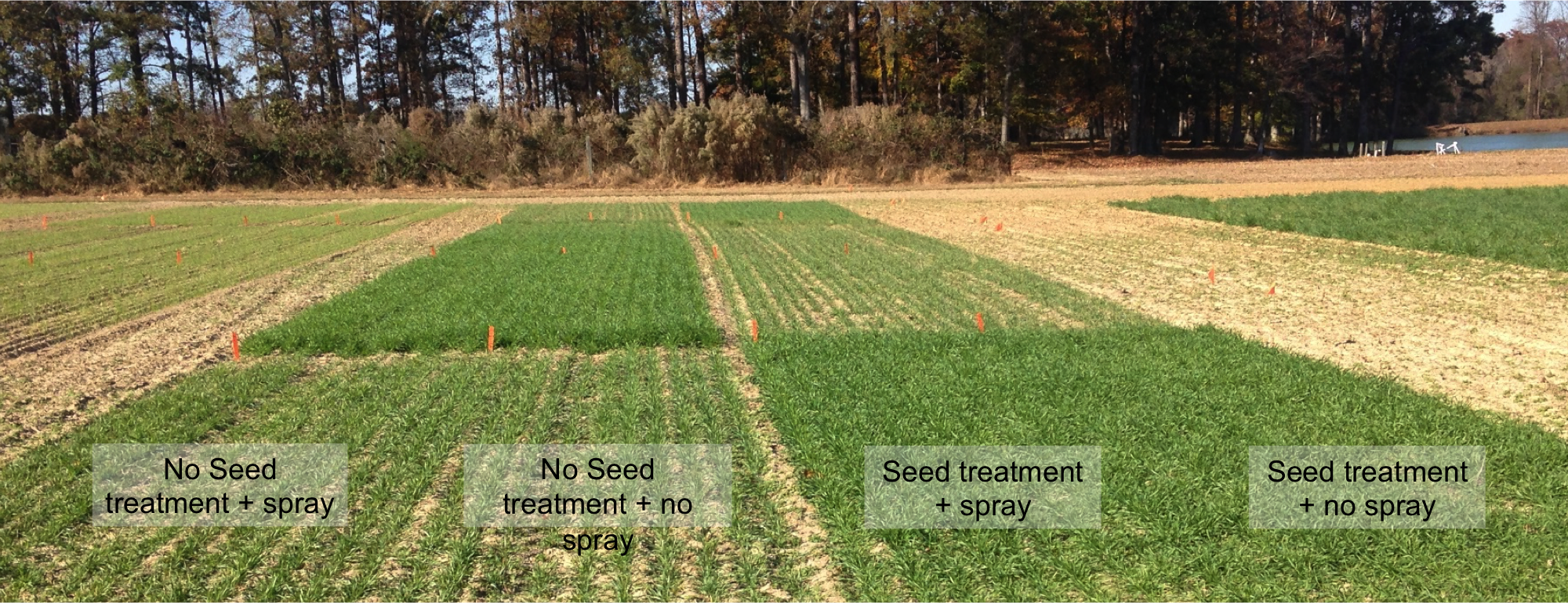 The visual benefit of an insecticide seed treatment for Hessian fly.