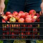apple-storage-tips