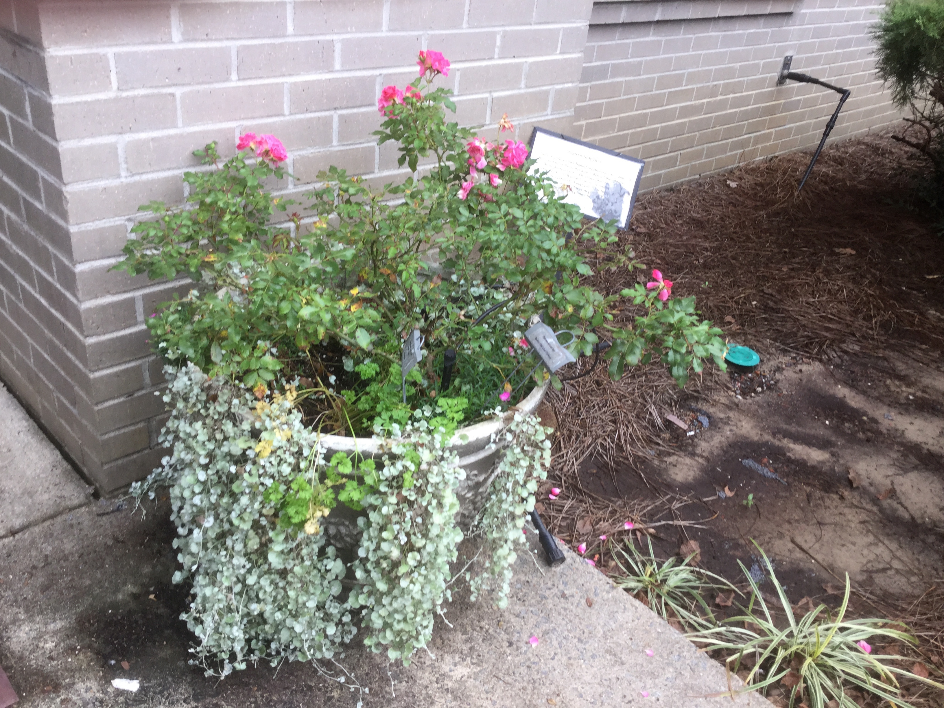 Container Gardens | North Carolina Cooperative Extension