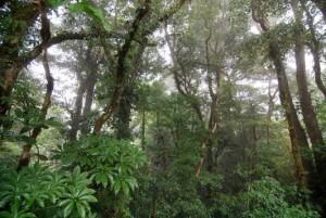 monteverde-cloud-forest-reserve