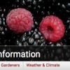 NCSU blackberry & raspberry portal