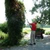 2013 - June 27 - Arboretum - Work Day - BG - Passion Flower Trimming  - 1