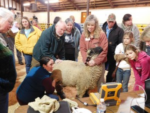 Cover photo for Regional Sheep & Goat Producer Training