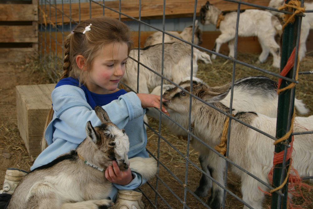 The goat kids love sucking on visitors' fingers! Photo by Debbie Roos.