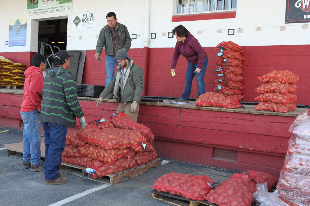 Sorting through the 20,000 lbs. of organic seed potatoes on the day they were delivered. Photo by Debbie Roos.