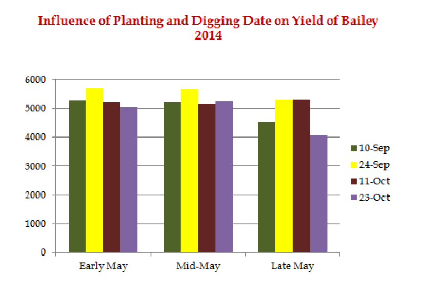 Influence of Planting and Digging Date on Yield of Bailey 2014