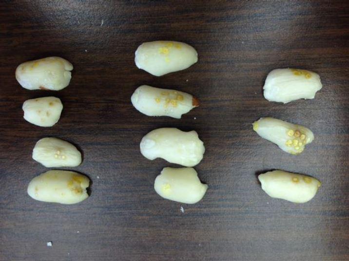 peanut kernels showing damage