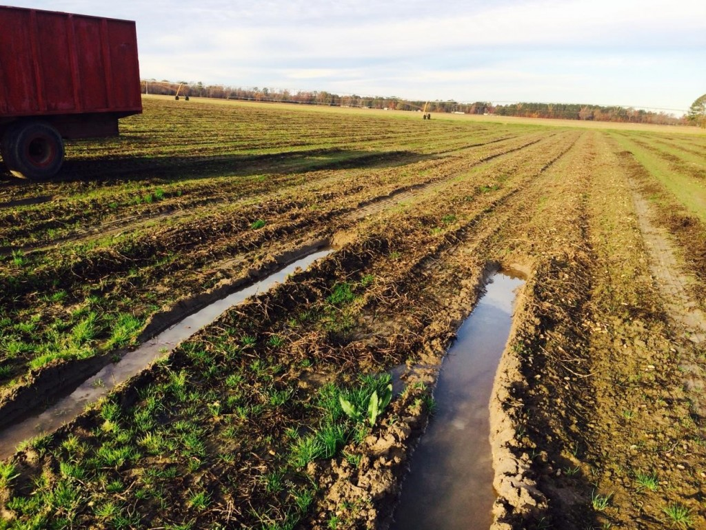 Poor conditions for harvesting in the V-C region.