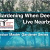 Video-Gardening-With-Deer