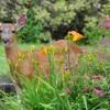 deer_garden