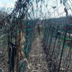 2014 stokes farm tour 007