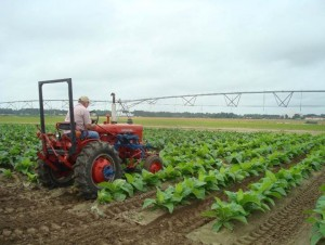 Cover photo for From the Field-Agronomy Notes
