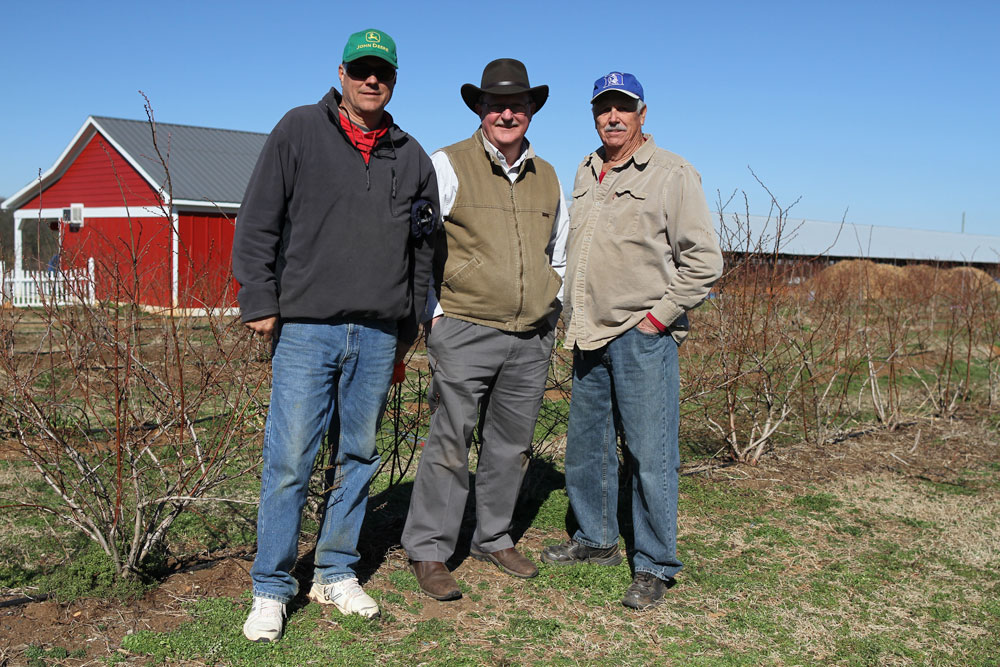 From left to right: Dwayne Howard, NCSU Blueberry Specialist Bill Cline, and Harold Howard. Harold manages the peach and apple trees and his son Dwayne manages the blueberries. Photo by Debbie Roos.