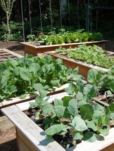 Successful ve able gardening begins with planning – where will you locate your garden Will you grow in beds containers or some other system