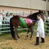 vet school horse