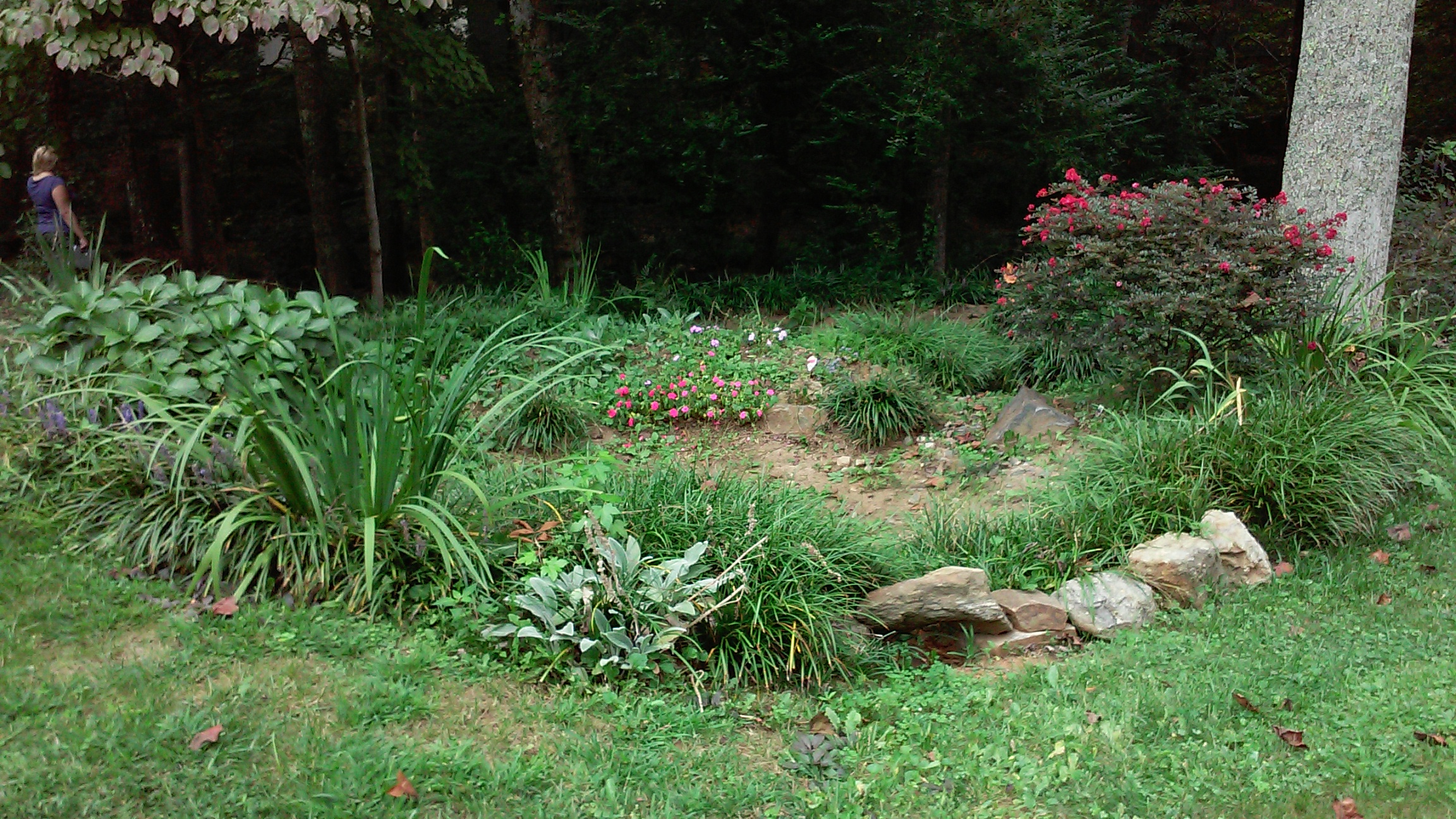 This homeowner had quite a bit of water flowing through their property. With the help of Forsyth Soil & Water Conservation District and Forsyth County Cooperative Extension, they were able to install a terraced rain garden to slow and spread out the flow while watering some cool plants!