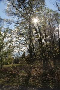 Tree in the glow of sun