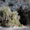 frozen-plants-150x150