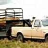 Bulls-on-Trailer