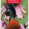 Female Eastern Tiger Swallowtail Butterfly on Purple Coneflower (Echinacea purpurea)