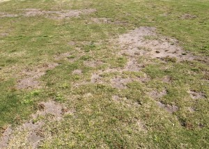 Compacted soils lead to dead areas in lawn