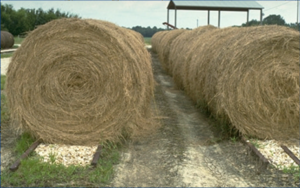 Hay-Drain