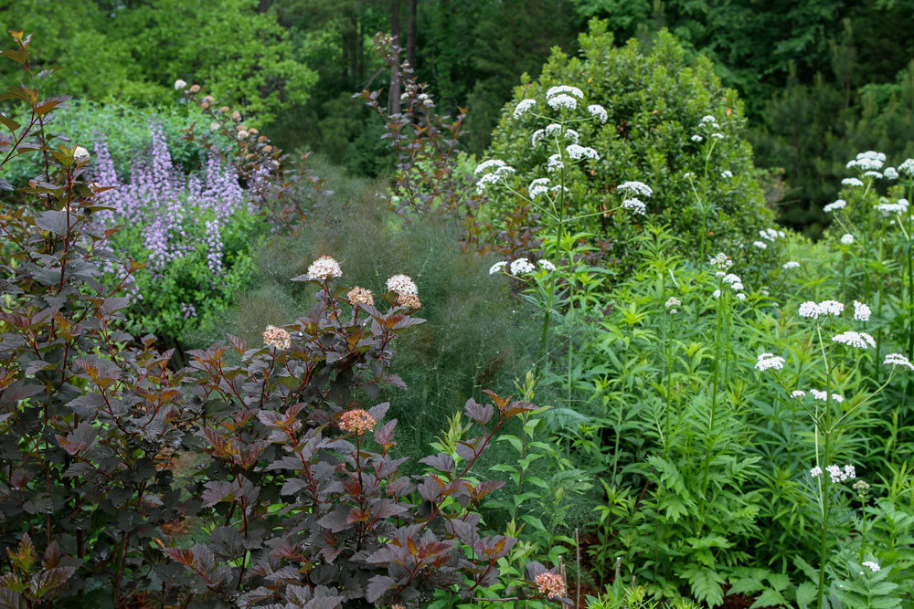 Spring shot of one of the beds in the pollinator garden featuring eastern ninebark, wild indigo, gallberry, garden heliotrope, bronze fennel, and more! Photo by Debbie Roos.