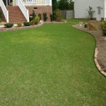 lawn greening up in the spring