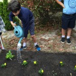 Student watering the raised bed at St. Egbert's school