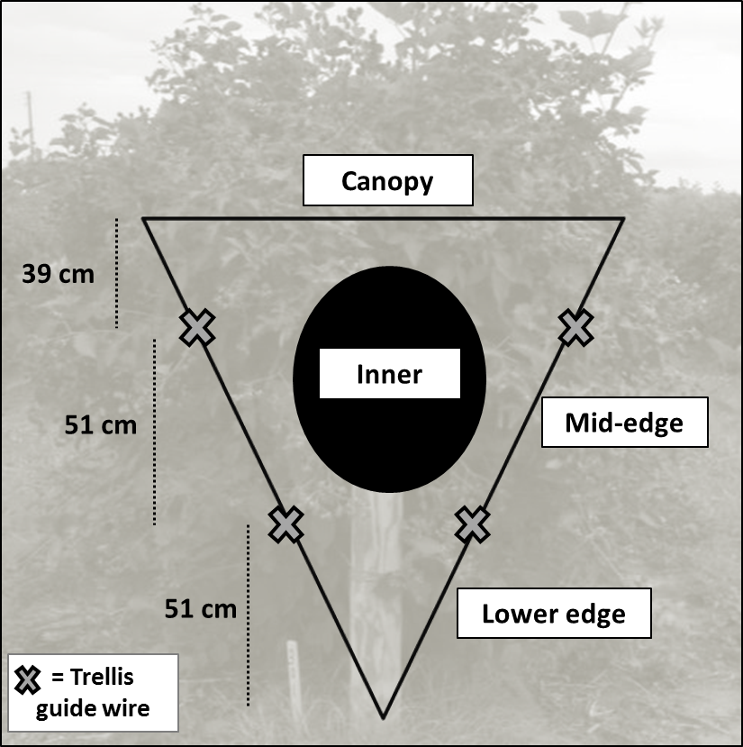 Infestation sampling locations in blackberry canes