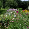 Late June in the pollinator garden. Photo by Debbie Roos.