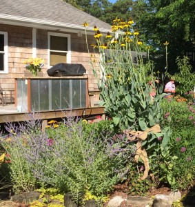 Flower Garden featuring a cabbage coneflower that is over 6 feet tall.