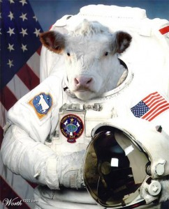 Space_cow
