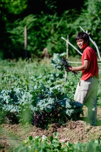 Transplanting-Traditions-Ha-Na-Son-Kale