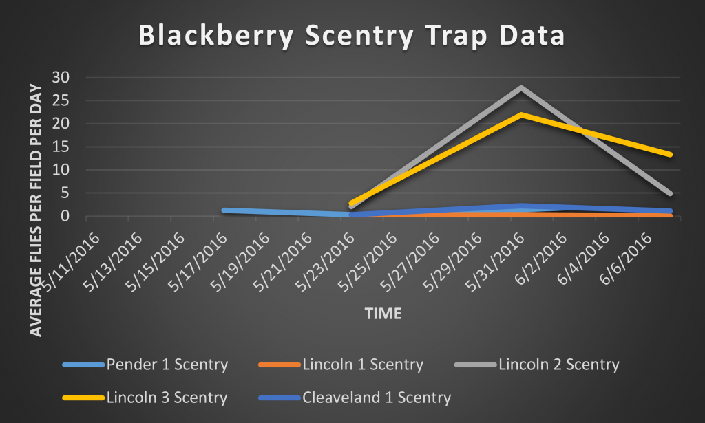 This is a graph depicting number of SWD captured on a total/SWD per day basis in Scentry bait traps.