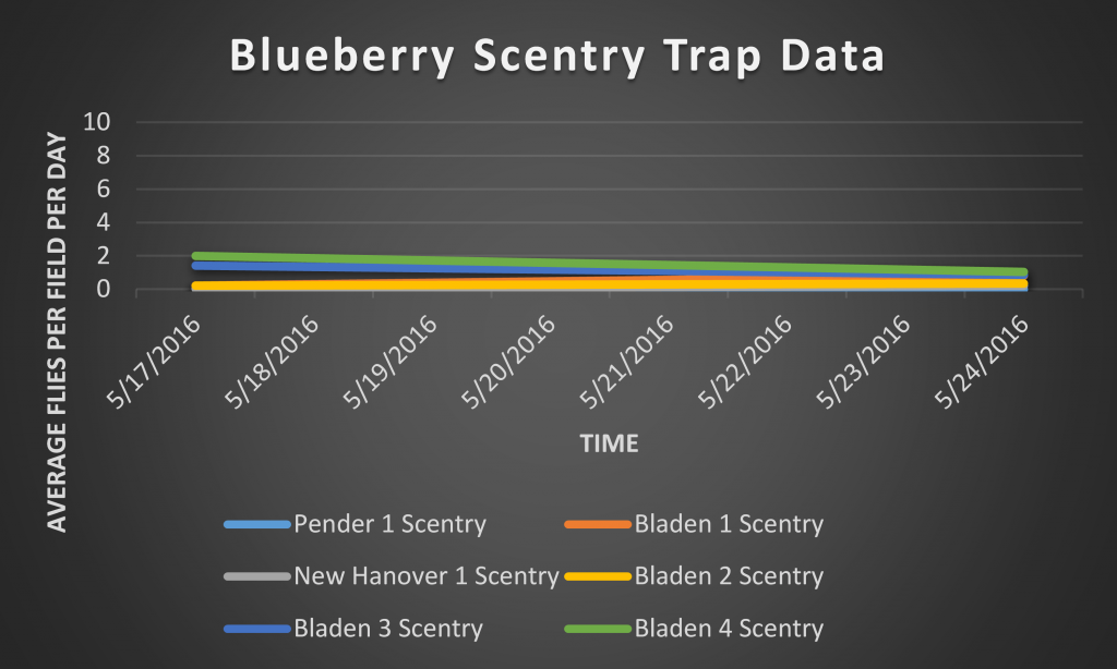 This graph shows the number of SWD caught in the Scentry bait traps from 5/17/2016 through 5/24/2016
