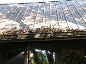 roof gutter clogged with leaves , debris and rainwater attract mosquitoes