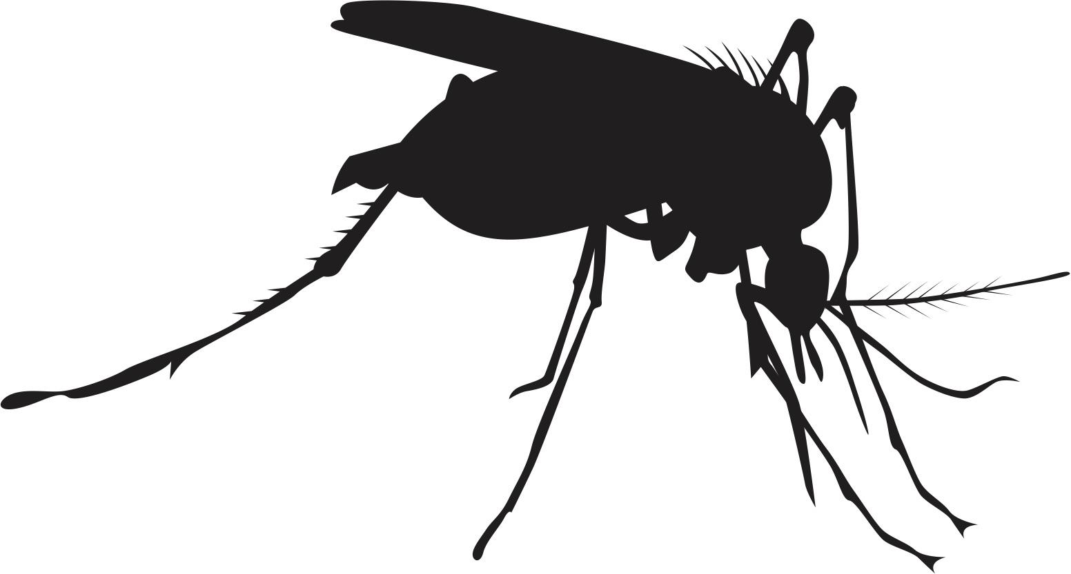 mosquito_GJMUsvId