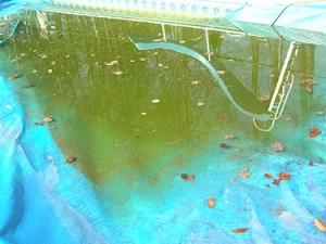 plastic tarps on pools collect water and debris.