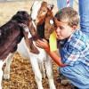 Tobey&Goats