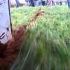 plow in pasture